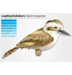Laughing kookaburra vector