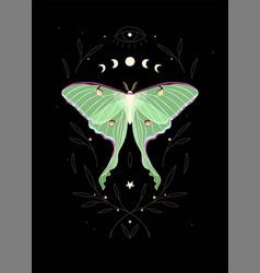 Moon moth and moon cycle vector