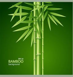 realistic 3d detailed bamboo shoots background vector image