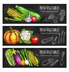 Vegetable and bean chalkboard banner food design vector