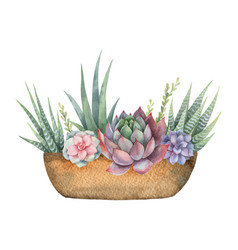 Watercolor composition cacti and vector