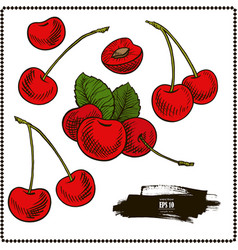 Cherry set vector