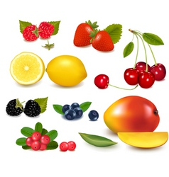 Fresh summer fruit vector