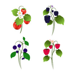 Set four berry bushes vector