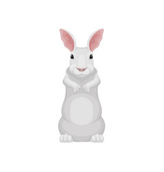 adorable rabbit standing on hind legs front view vector image