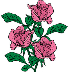 Bouquet of three pink roses drawn by hand vector