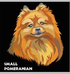 Colored small pomeranian vector