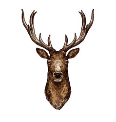 Deer elk or reindeer sketch of wild forest animal vector
