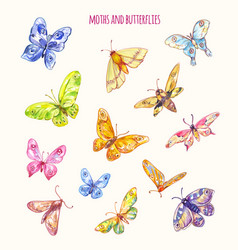 Different moths and butterflies in watercolor vector