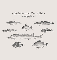 fish vintage set vector image