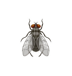 Fly icon pest control and insect parasite blowfly vector