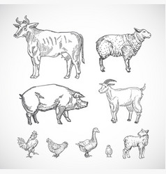 Hand drawn domestic animals set a collection vector