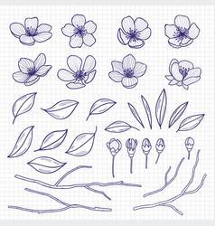 Sketch style flowering cherry or apple tree vector