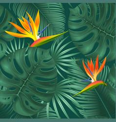 Summer tropical frame design vector