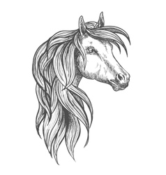 Cavalry morgan horse sketch symbol vector