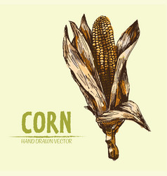 Digital detailed corn hand drawn vector