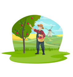 farmer picking apple fruits at farm garden icon vector image