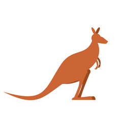 Kangaroo isolated wallaby on white background vector