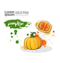 Pumpkin hand drawn watercolor vegetable on white vector