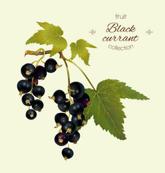 Realistic of black currant vector
