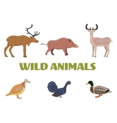 Wild forest animals with boar deer moose duck vector
