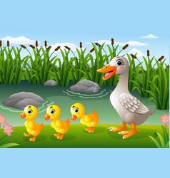 cartoon duck family vector image