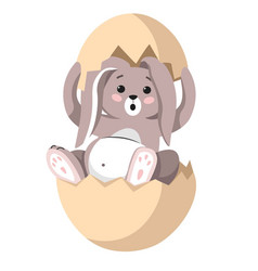 easter bunny sitting in eggshell furry animal vector image