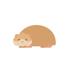 hamster isolated cute pet on white background vector image