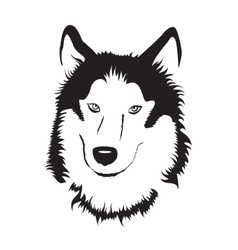 Siberian Husky Stock vector image vector image