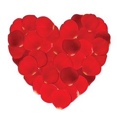 Heart of red petals and blank white paper vector image vector image