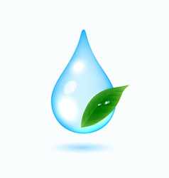 drop of water with green leaf vector image