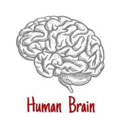 Isolated human brain engraving sketch vector