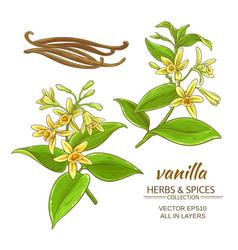 vanilla set vector image