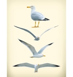 Seagulls icons vector image