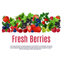 fresh berries and fruits poster or banner vector image vector image