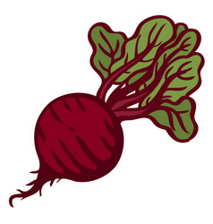 beet isolated object white background vector image