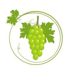 Bunch green grapes vector