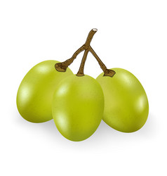 green grape isolated on the white background vector image