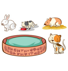 isolated picture different pet vector image
