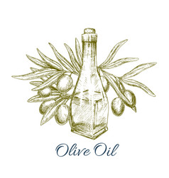 oil bottle with olive fruits sketch poster vector image vector image