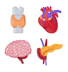 Anatomy and organ logo vector