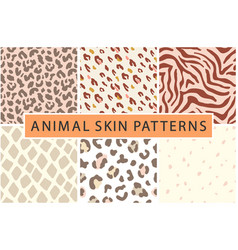 Animal leopard skin seamless collection vector