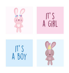 Boy or girl gender reveal cute rabbit female and vector