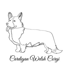 Cardigan welsh corgi dog coloring vector