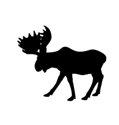 Silhouette adult moose vector image