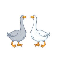 two geese white and gray vector image