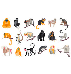 collection of different breeds of monkeys vector image