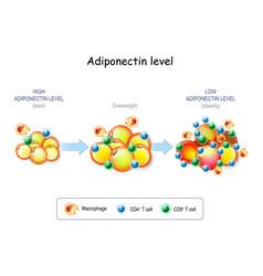 Adiponectin level vector
