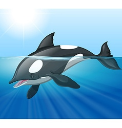 Killer whale swimming in the sea vector image