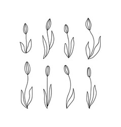 set of doodle flowers and leaves hand drawn vector image
